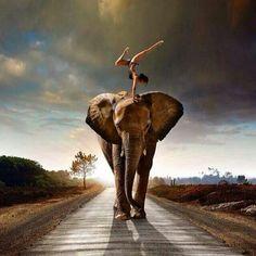 I LOVE this! Elephants and yoga. Amazing.