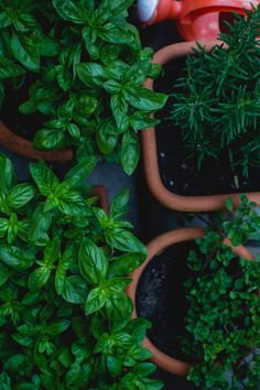 Herb gardening in alignment with the moon - how the lunar cycle can guide your herbal garden - herbalism #herbgarden #herbalism #herbalist #spirit