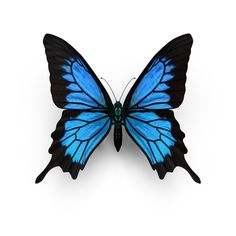 Object of Papilio Ulysses Butterfly available for download as PNG or PSD on PixelSquid.com.