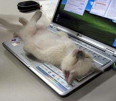 20 Cats Sleeping On Computers
