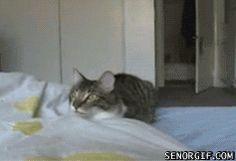cat gifs