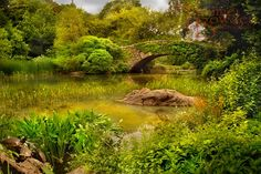 """""""Summertime in Central Park"""" 8x10 photograph by Tammie Bowden"""