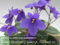 Ballet Blueberry Swirl