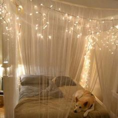 My puppy, bed canopy, and blue sheets. Dreams are about to come true!