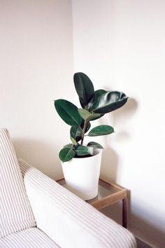 8 Indoor Plants That Will Turn Your Home Into A Tropical Oasis. A simple addition of lush and colorful indoor plants can extend that coveted tropical vibe throughout your home. Don't have much of a green thumb? Fear not– We've compiled a list of easy-to-care-for indoor house plants you'll love. Now all you need to do is choose your favorites and seek out a few stylish containers for potting!