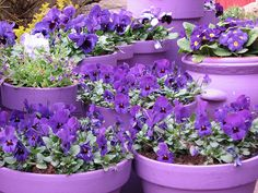 more purple flowers and pots