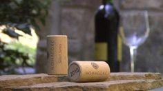 Historia del Corcho – Importancia del Corcho en el Vino