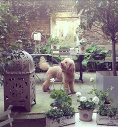 Secret garden filled with decorative pieces and kitty dog.