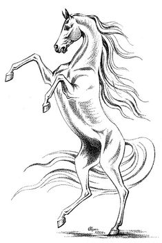 гелевая ручка,2005 г. Outline Drawings, Horse Drawings, Animal Drawings, Horse Coloring Pages, Fairy Coloring Pages, Horse Face Drawing, Horse Outline, Horse Tattoo Design, Tire Art