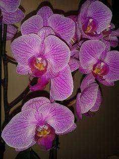 Preciosas orquídeas