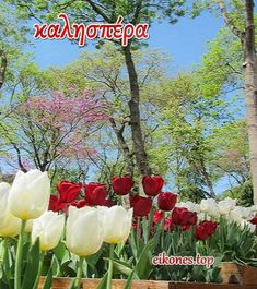 Beautiful Pink Roses, Greek Language, Challenges, Plants, Planters, Plant, Planting