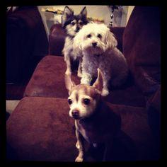 Best friends Bogie Maggie and Banksy