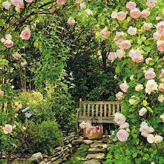 I love rose gardens. I would love to build one.