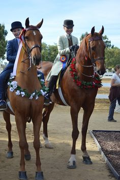 Two champion Saddlebreds. How many dreams have come true on these two beautiful horses. Saddlebreds are the best horses for children.