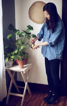 Indoor Plant Guide | @Kinfolk Farm Farm Farm Farm Farm.