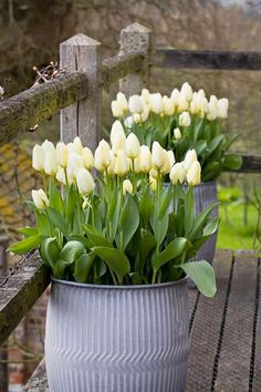 Cool idea, tulips in pots.