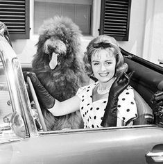 TV Dogs: COCO ON THE DONNA REED SHOW  This big, fluffy poodle joined the Stone clan in 1961 & weighed in at 135 pounds.