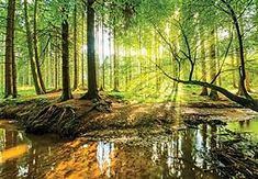 murimage Photo Wallpaper Forest 366 x 254 cm Including Paste Wall Mural wood Foliage Trees Sunlight Nature livingroom 3d Wallpaper For Walls, Forest Wallpaper, Photo Wallpaper, Pictures Images, Print Pictures, Deco Stickers, Fabric Wall Art, Cute Wallpapers, Wall Murals