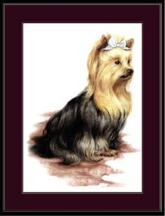 "English Picture Print Pet Yorkshire Terrier Dog Art | eBay 7.99,  9""x13""."