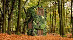 Budoucnost architektury? Dokonalé splynutí s přírodou v obydlených lesích
