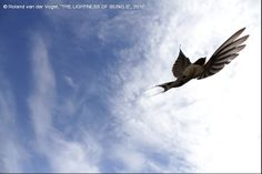 SWALLOW IN THE SKY  1 Photograph by Roland van der Vogel