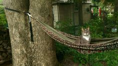 Cat in hammock (not enjoying it) http://ift.tt/2tCbXTI