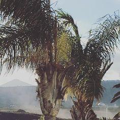 #spain #kanaren #canarias #palmen #lanzarote #futeventura #instatraveling #instagram #palm