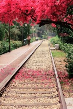 """If you do not venture forth, you will not know the bounty that awaits you"" • photo: Railway Park in Xiamen, China • original source not located"