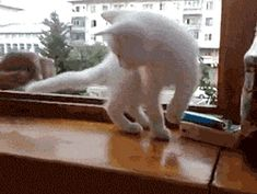 """No, Human! You will fall"" - Imgur"