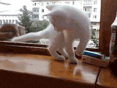 """No, Human! You will fall"" - Imgur"