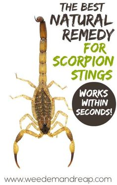 NATURAL SOLUTION FOR SCORPION STINGS!