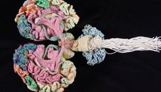 The Museum of Scientifically Accurate Fabric Brain Art