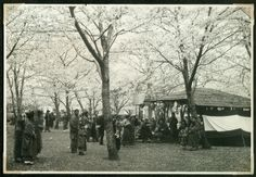 Street life in Yokohama park with blossoming cherry trees. | by National Museum of Denmark