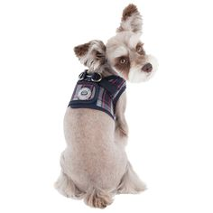 Puppia Vogue Dog Harness B Vest in Navy, a Stunning and very Popular choice for Pampered Pooches Cat Collars, Dog Harness, Pet Supplies, Vogue, Vest, Navy, Australia, Popular, Link