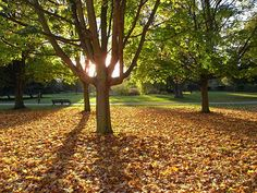 Regent's Park in the fall. . . put it on the list!