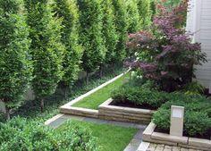 Modern garden, European Hornbeam
