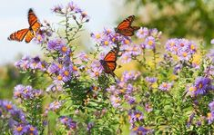 butterfly, flowers, and mariposas image