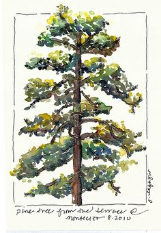 Montecito 2010   Flickr - Photo Sharing! Family Camping, Art Sketchbook, Watercolor Art, Drawings, Nature, Painting, Watercolors, Ink, Art Journals