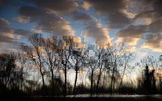 nature . tree . forest . photograhy . molnártimiphoto
