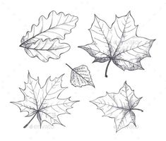 Buy Fall Autumn Season Leaves Sketch Outline Vector by robuart on GraphicRiver. Foliage of different kinds of trees. Fall Leaves Tattoo, Autumn Tattoo, Tattoo Sketches, Drawing Sketches, Blatt Tattoos, Leaves Sketch, Fall Drawings, Leaf Outline, Flower Sketches