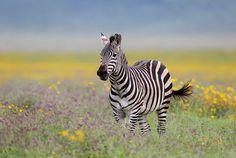 Ngorongoro Crater in rainy season by Michal Jirouš on 500px