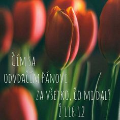 Citát - Citáty - Biblia - slovensky Motto, God, Viera, Depression, Quotes, Life, Bible, Dios, Quotations