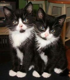 A double cute black kittens for you to see. It is double WOW.