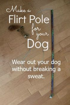 a Flirt Pole Great way to get in exercise for your high prey drive pooch!Great way to get in exercise for your high prey drive pooch! Hotel Pet, Dog Enrichment, Diy Dog Toys, Homemade Dog Toys, Easiest Dogs To Train, Dog Games, Aggressive Dog, Dog Activities, Dog Training Tips