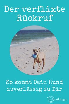Das verflixte Thema Rückruf -unsere Tipps- wie euer Hund zuverlässig kommt The callback with the dog Dog Training Classes, Best Dog Training, Food Dog, Dog Shots, Cesar Millan, Dog Hacks, Dog Agility, Dog Behavior, Dog Care