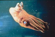 Two words for you...Vampire Squid.