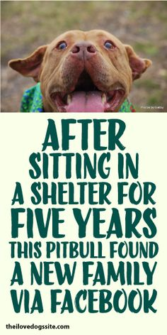 After Sitting In A Shelter For Five Years, This Pit Bull Found A New Family Via FaceBook