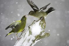 Winter wildlife photography: tips for taking amazing pictures at home. jmeyer | 12/12/2012. http://www.digitalcameraworld.com/2012/12/12/winter-wildlife-photography-tips-for-taking-amazing-pictures-at-home/