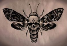 Skull Moth Tattoo Design