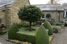 Topiary encircled tree. From www.karenwatson.co.uk.